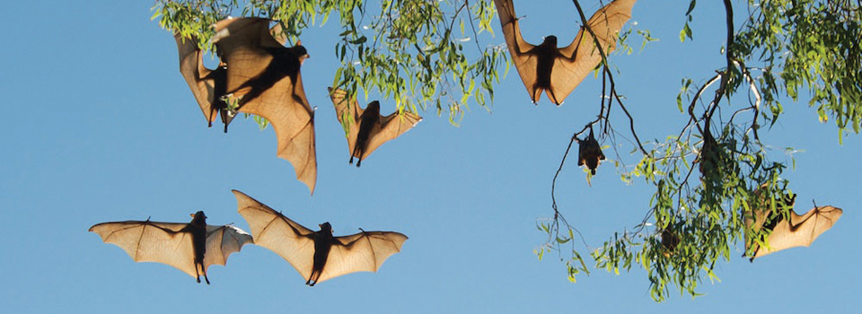 WebQuest – My Favourite Bat